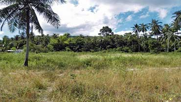 flat land in Thong Krut
